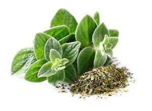 Oregano-Italian-Non-GMO-Heirloom-Culinary-Garden-Herb-Seeds-Sow-No-GMO-USA