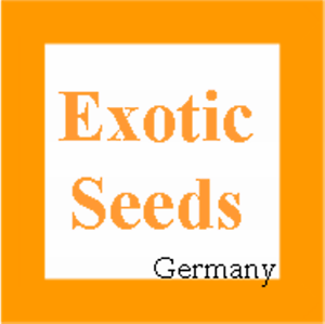 Solanum-virginianum-Thai-Aubergine-Kantakari-30-Samen