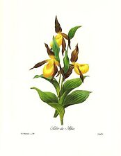 1991 Vintage REDOUTE FLOWER #134 LADY SLIPPER ORCHID SABOT Color Art Lithograph