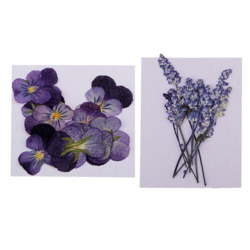 22x Pressed Real Dried Flowers Violet /& Sage for DIY Floral Art Craft Decor