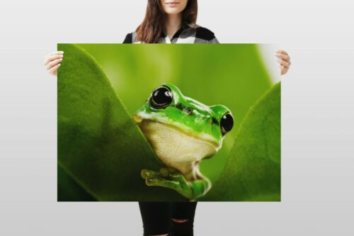 A1Green Frog Poster Art Print 60 x 90cm 180gsm Amphibians Lime Frogs #8229