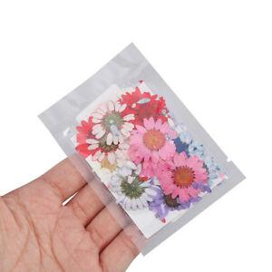 1-beutel-gedrueckt-echt-getrocknete-blume-trocken-diy-handwerk-epoxy-schmuck-TPD