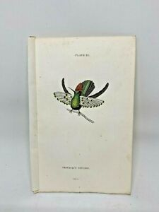 1st-Ed-Hand-colored-Jardine-039-s-Natural-History-1834-Gould-039-s-Hummingbird-12