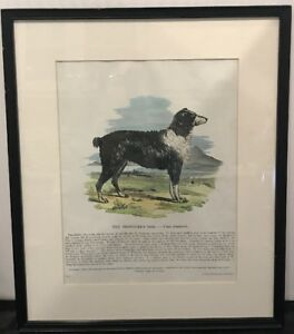 1800-s-Sheep-Dog-Print-The-Shepherd-s-dog-By-R-Clay-Printer-Plate-33-16X14