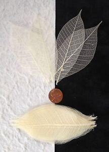 25-Skeleton-Leaves-Bleached-White-medium-rubber-leaf-Natural-Soap-Wedding-cards