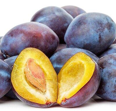 10 Plum blue SEEDS RARE ORGANIC FRUT sweet taste domestica prunus instititia EU