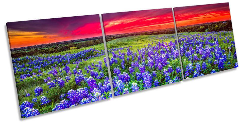 SUNSET PAESAGGIO blubonnet FIORI TREBLE TELA Wall Art Box cornice foto
