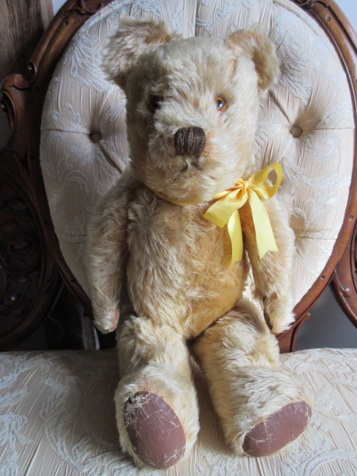 """English 1950s teddy bear 21"""" tall wood wool filled square muzzle profile"""