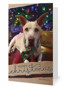 image is loading scrappy dizzle designz 10 dog holiday cards merry - Dog Holiday Cards