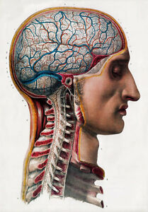 ML02-Vintage-1800-s-Medical-Surgical-Human-Brain-Head-Poster-Re-Print-A2-A3-A4