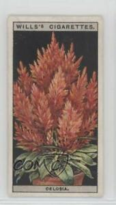 1925-Wills-Flower-Culture-in-Pots-Tobacco-Base-14-Celosia-Non-Sports-Card-2h8