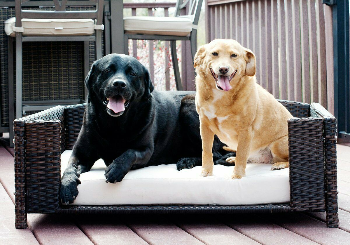 Wicker Dog Pet Bed Furniture Cushion Portable Indoor Outdoor Sofa Padded SM-LG