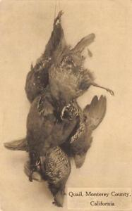 Quail-Monterey-County-California-Dead-Birds-ca-1910s-Vintage-Hunting-Postcard