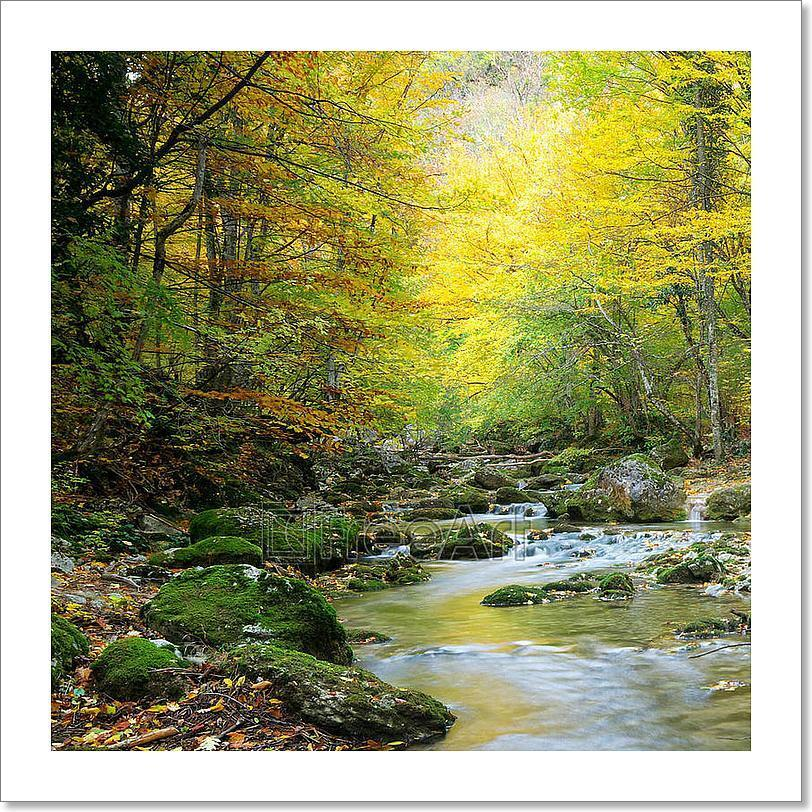 River In Autumn Forest Art Print Home Decor Wall Art Poster - H