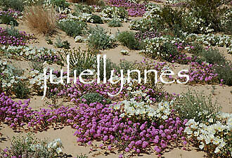 juliellynnes