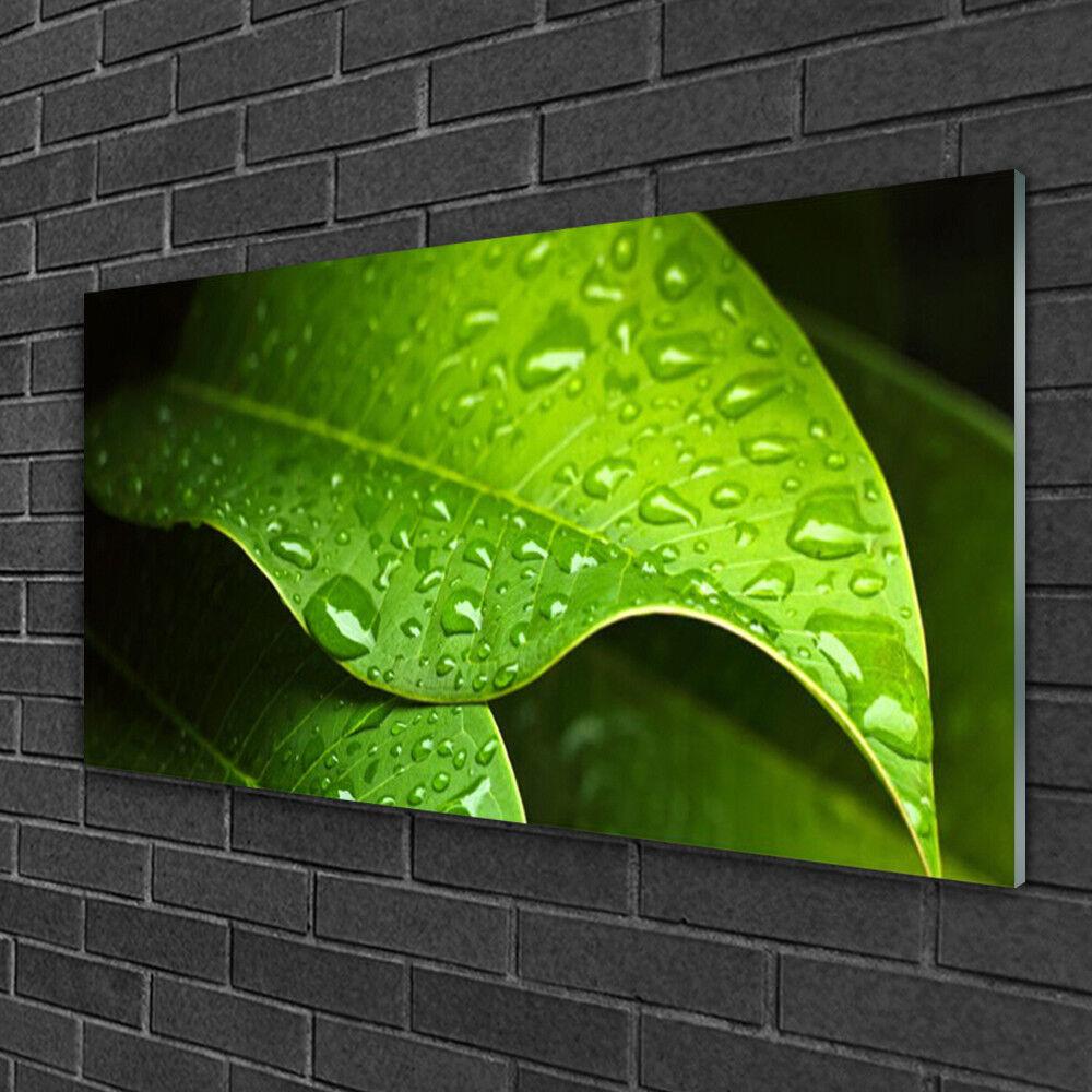 Tableau sur verre Image Impression 100x50 Floral Feuille Gouttes Rosée