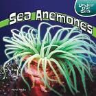 Sea Anemones by Meryl Magby (Hardback, 2012)