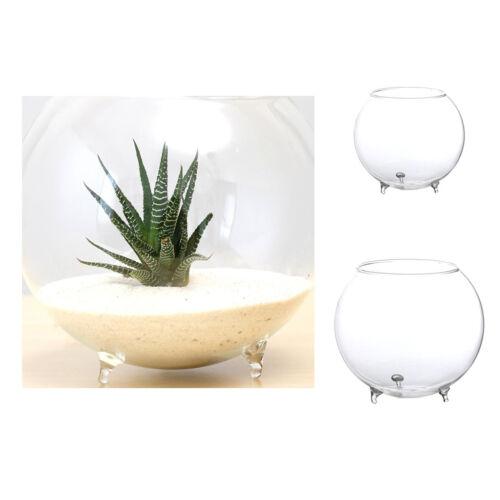 Clear Glass Vase Flower Plants Pot Terrarium Container Mini Fish Tank Bowl S