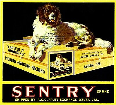 Azusa Sentry Newfoundland Dog Orange Citrus Fruit Crate Label Art Ad Print