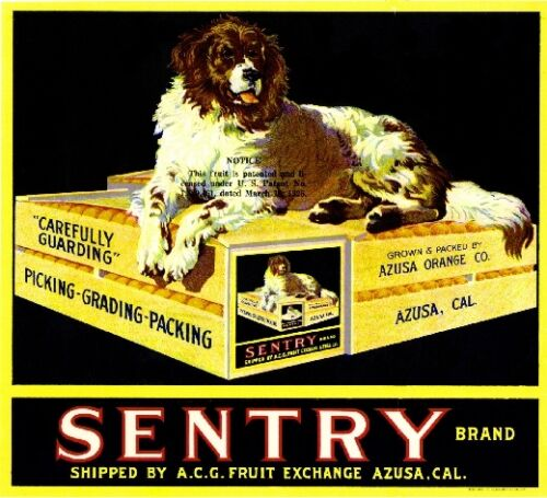 Azusa Sentry Newfoundland Dog Orange Citrus Fruit Crate Label Art Ad Print