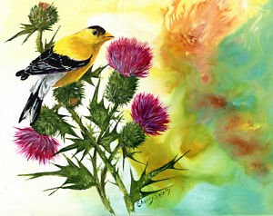 Goldfinch-with-Thistles-8X10-BIRD-Print-from-Artist-Sherry-Shipley