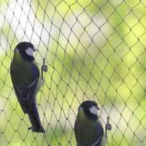 Garden Bird Netting | 1m - 20m | Pond Garden Fruit Veg Crop Protection from Bird