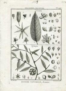 Redoute-P-J-Celebre-Peintre-Rare-Gravure-Originale-de-1789-Uvaria-Pl-495