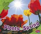 Plants in Spring by Martha E Rustad (Paperback / softback, 2012)