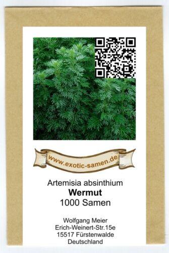 Vermouth-artimisia absinthium 1000+ graines