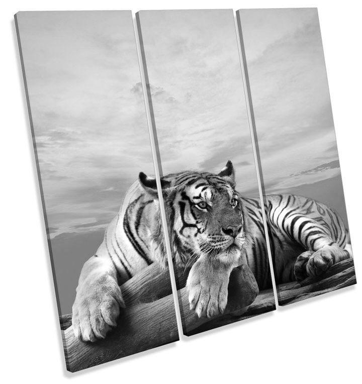 Tiger Sunset Blanco y Negro LONA pa Foto rojo  arte Foto pa impresión cuadrado de agudos e31371