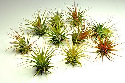Air Plants Collection On Ebay