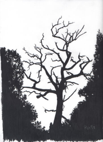 Pencil B/&W ~~ TREE in SHADOW ~~ Professional 9 by 12 Print  **FREE SHIPPING**