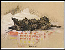 SCOTTISH TERRIER DOG LYING ON A BED CHARMING DOG PRINT POSTER
