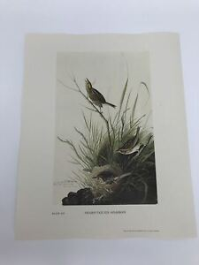John-James-Audubon-Folio-Plate-163-Sharp-Tailed-Sparrow-Limited-750