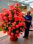 100-Pcs-Climbing-Geranium-Seeds-Pelargonium-Plant-Bonsai-Perennial-Flower-Garden thumbnail 18