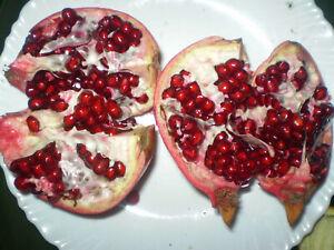 pomegranate-POMEGRANATE-Dwarf-tree-seeds-GRENADINE-SYRUP-20-Seeds-GroCo-USA