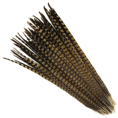 "50 Pcs ENGLISH RINGNECK PHEASANT Natural Feathers 22/""-24/"" Halloween//Hats//Costume"