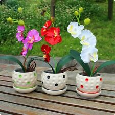 200pcs Phalaenopsis Orchid Seeds Mixed 22 Types Flower Seeds Senior Ornamental