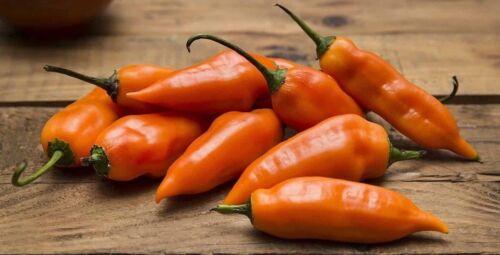10 Graines de piment Aji Amarillo Péruvien Pepper Seeds