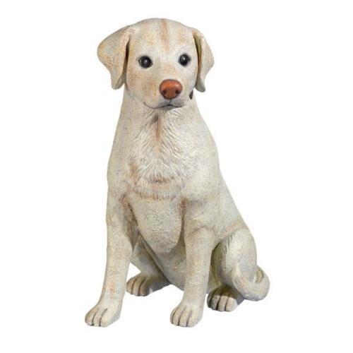 Cement Lab Labrador Retriever Dog Indoor Outdoor Grasslands Road