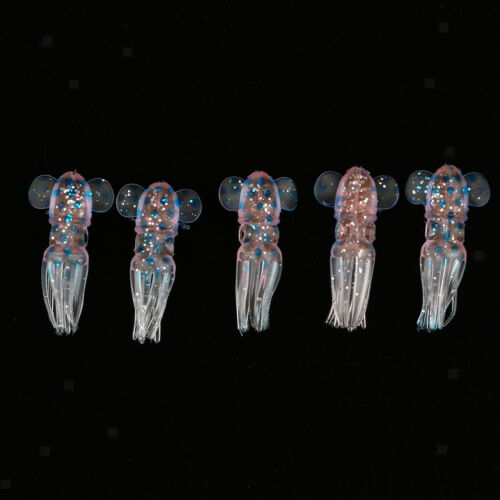 Packung 5 Stücke 3D Augen Tintenfisch Krake Trolling Salzwasserköder