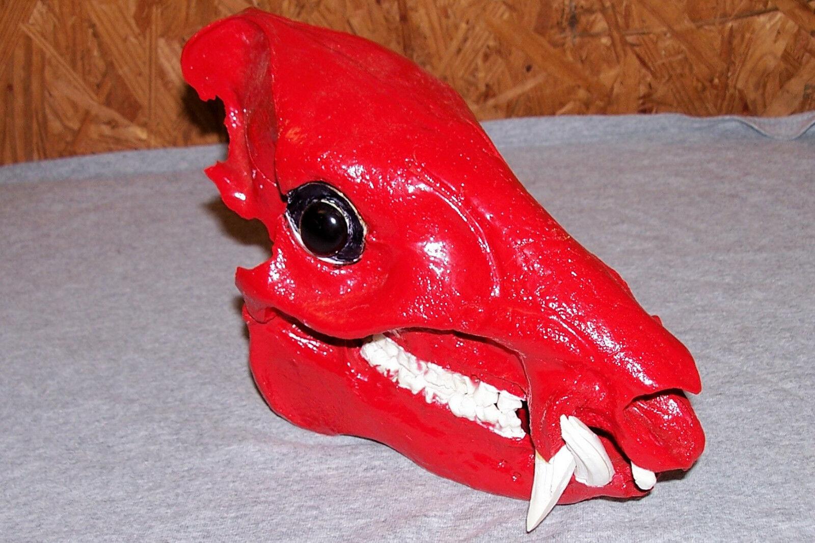 Razorback Hog cráneo Universidad de Arkansas Razorbacks cerdos cabeza Taxidermia u de un