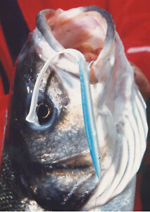 BASS-LURES-No1-THE-TOP-FOR-BASS-CATCH-BIG-SINCE-1973-034-034-THE-BEST-FISHING-LURES-034-034
