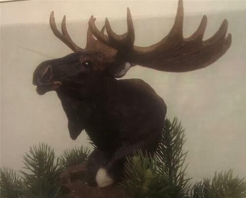Barto Buckhorn Pine Tree Topper Moose New