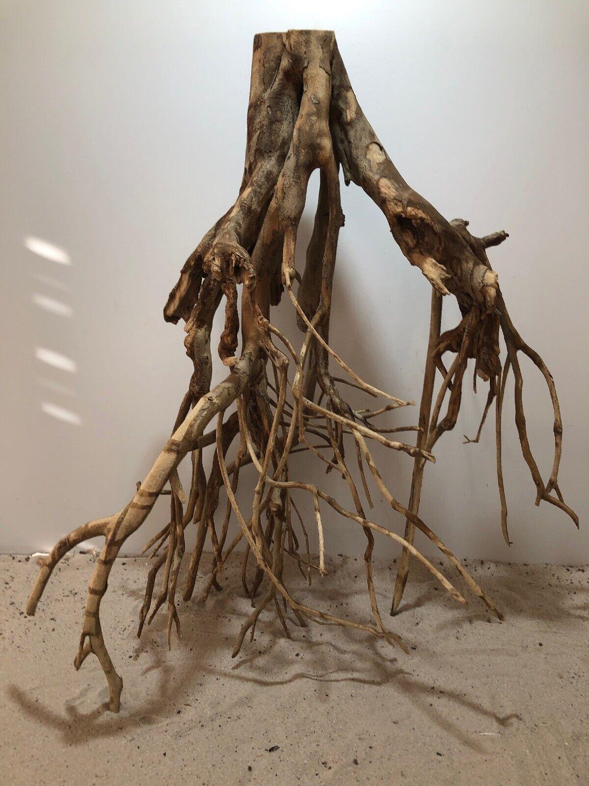 Talawa Wurzel ähnlich rote Moorwurzel, Moorkien,Mangrove  1088 63x30x73cm