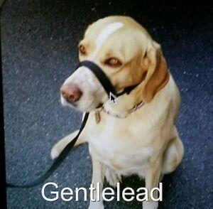 Deje de tirar de perro Halti/'s//Halter//Plomo Suave toma segundos para poner en el perro