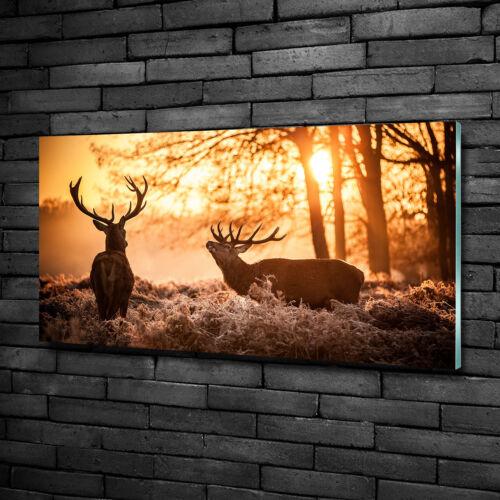 Glas-Bild Wandbilder Druck auf Glas 100x50 Deko Tiere Hirsch Sonnenaufgang