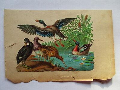 GroßZüGig Schöne Alte Präge Oblate Glanzbild Enten Vögel Um 1900 Ca Oblaten & Glanzbilder 13 X 9,5 Cm Büro, Papier & Schreiben
