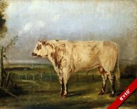 A YOUNG BULL CATTLE PAINTING BY JOHN W. AUDUBON ART REAL CANVAS GICLEE PRINT