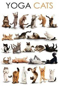 Yoga-Cats-Chats-Panneau-Metallique-Plaque-Voute-Signe-en-Etain-Metal-20-X-30-cm